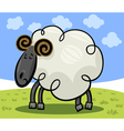 Cartoon of ram or sheep vector image