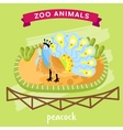 Zoo Animal Peacock vector image