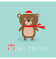 Cute brown bear in santa claus hat and scarf Candy vector image