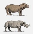 hippopotamus and black or white rhinoceros hand vector image