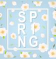 cherry flower spring banner vector image