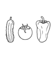vegetables - cucumber tomato pepper vector image