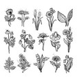 hand drawn wildflowers vector image