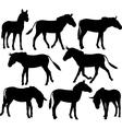 Zebra donkeys vector image