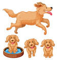 dog and puppies with brown fur vector image