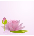 Pink waterlily flower with reflection in water vector image