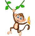 Cartoon monkey holding banana fruit vector image