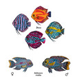 great aquarium fishes set vector image