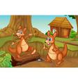 Kangaroos playing vector image