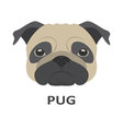 pug in flat style vector image