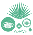 Agave vector image