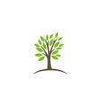 tree abstract botany ecology logo vector image