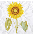 vintage of sunflower vector image