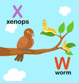 alphabet letter w-worm x-xenops vector image vector image