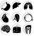 Body parts vector image vector image