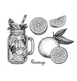 ink sketch of orange beverage vector image
