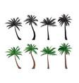 palm tree set nature floral design elements vector image