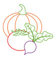 pumpkin tomato and beet vegetables fresh vector image