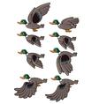 Flying Bird Animation vector image vector image
