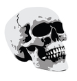 Horror skull vector image
