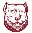pitbull mongrel symbol vector image