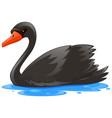 black swan in the water vector image