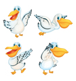 Set of Pelicans vector image