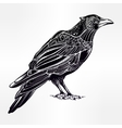 Detailed hand drawn raven bird vector image