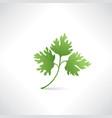 fresh green parsley salad healthy food icon vector image