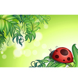 A bug above the green leaves vector image