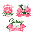 springtime roses bunches of greeting quotes vector image vector image