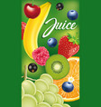 packaging with different fruits and berries vector image