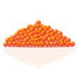 caviar 01 vector image vector image