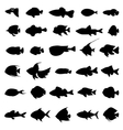 Fish silhouettes black on white vector image vector image