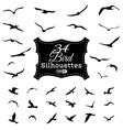 set of bird silhouettes vector image