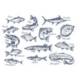 sketch icons of fish of river or sea vector image vector image