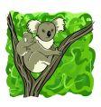 koala family vector image vector image