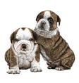 Puppy bulldogs 01 vector image