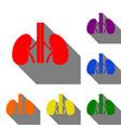 human kiddneys sign set of red orange yellow vector image