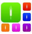stalk of ripe barley set collection vector image