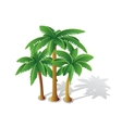 Tropical palms vector image