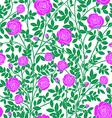 Violet roses vector image