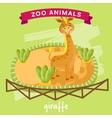 Zoo Animal Giraffe vector image