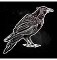 Detailed hand drawn raven bird vector image