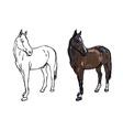 Elegance horse on white background vector image