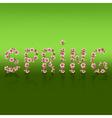 Spring word sakura blossom Japanese cherry tree vector image vector image
