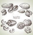 Hand drawn sketch nuts set of eco food vector image