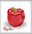 Red bulgarian pepper vector image