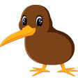 a close up kiwi bird vector image