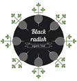Black radish vegetables vector image